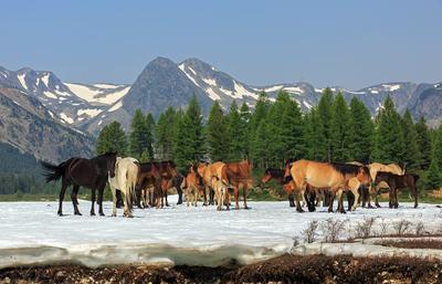 Лошадиный полдень