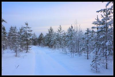 декабрьский вечер... зима декабрь лес  снег сосна