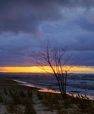 Одинокое деревце Тучи закат дерево пляж море