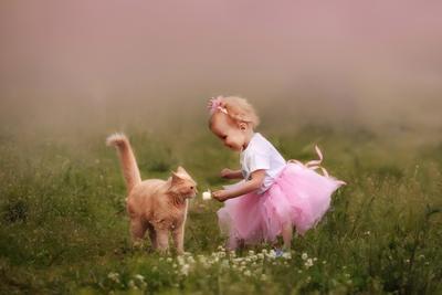 Рыжики кот девочка малышка принцесса котенок