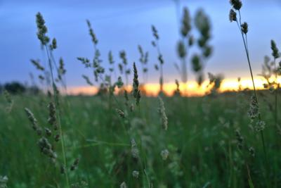 Поле на закате лето поле закат