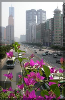 обыкновенные Китай... китай