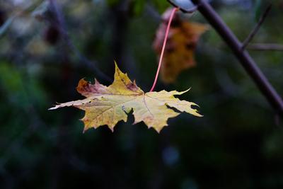 Последняя листва. осень, листья,