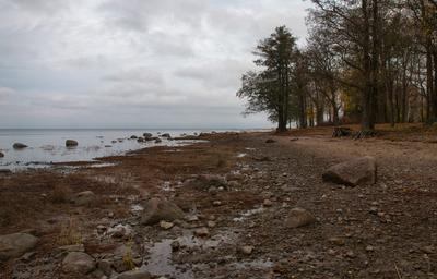 Поздняя осень Осень Финский залив