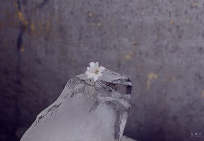 миниатюра, вдохновлённая холодом лёд цветок зимнее