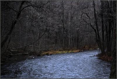 Петяярви, месяца Листопада.(1) лес осень