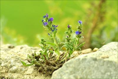Сквозь камень цветок камень к солнцу