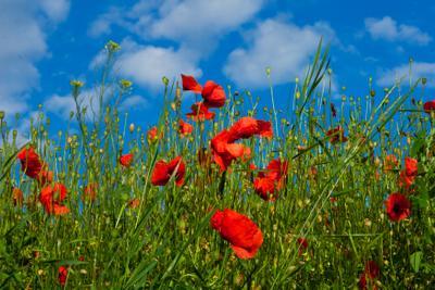 маки маки небо облака поле трава