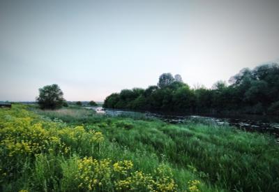 *** Природа ветер цветы деревья лето зелень