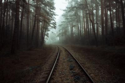 Ожидая поезд призрак Природа пейзаж туман лес дорога