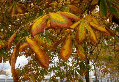 Палитра осени осень палитра