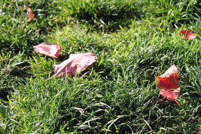 Капли лета на траве