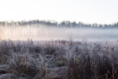 Рассвет мороз солнце утро рассвет деревья кусты трава поле лес