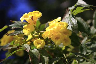 Yellow цветы