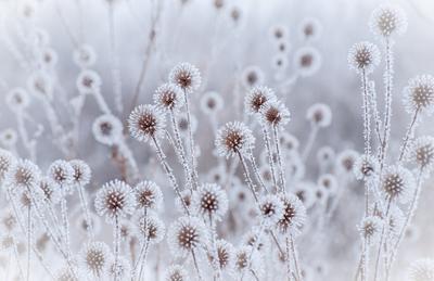Цветы зимы