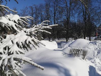 В снежной шубе Февраль ёлка небо снег
