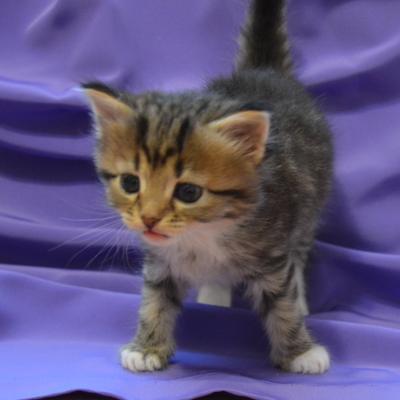 Грустная красавица котенок