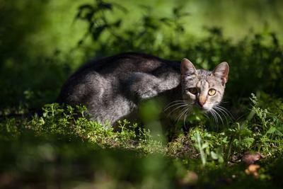 Монастырский кот кот монастырь Осташков