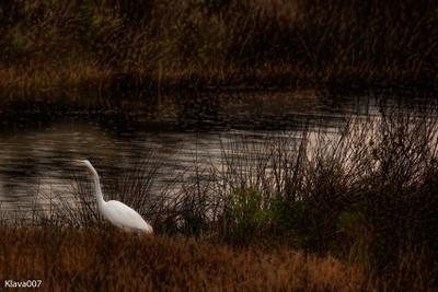 Цапля природа птица цапля камыш вода заросли