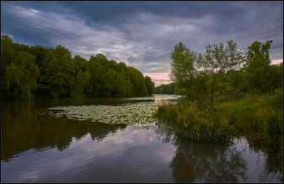 Летний вечер в Кузьминках* Летний вечер лесопарк Кузьминки дождливые погоды