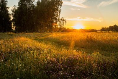 Жаркий вечер природа пейзаж лето.закат вечер татарстан новочувашский
