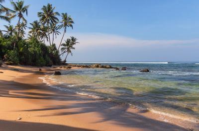 Тени пальм у океана Шри Ланка берег волны океан пальмы песок тени