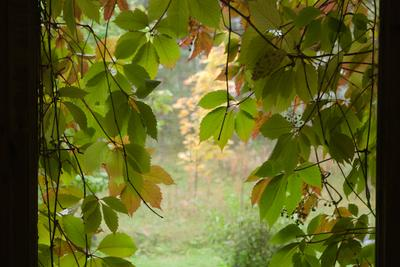 А в деревне осень... виноград осень