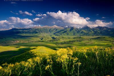 Палитра летнего вечера киргизия бишкек ала-тоо горы июнь горные цветы lazy_vlad lazyvladphoto nophotoshop