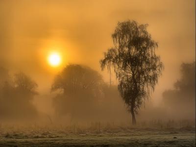 утро туманное пейзаж   утро   туман   осень