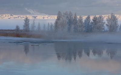 Зима зима туман озеро утки снег
