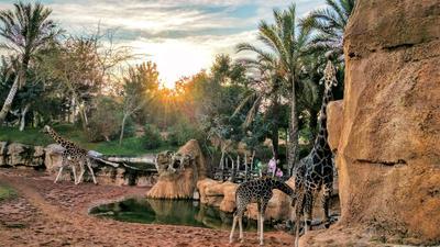 Био-парк Валенсия Валенсия био-парк зоопарк жираф африка