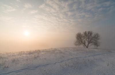 Возвращение... Утро изморозь рассвет мороз солнце пейзаж зима свет дерево снег