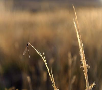 Стрекозка октябрь поле Темиртау