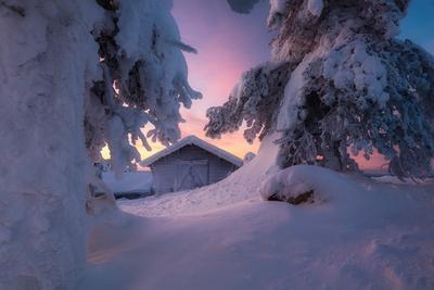 В утреннем свете утро рассвет снег зима