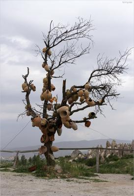 О плодах сувенирного дерева Гёреме, Каппадокия, май 2010го.