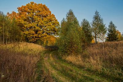 Осенняя дорога природа пейзаж осень татарстан урняк