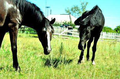 Лошади животные лошади
