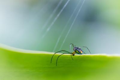 Паук паук макро насекомое лист