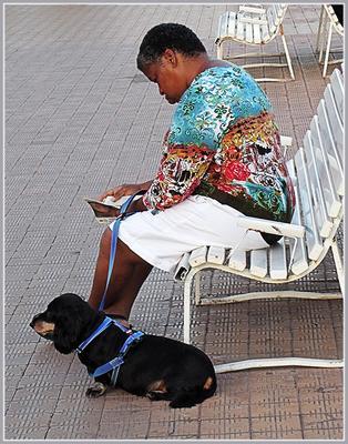 Послушание и ожидание... лавочка взаимопонимание Ницца Лазурный берег Франция июнь 2012