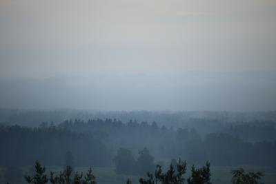 Остывающий лес.
