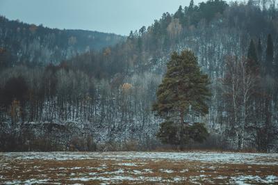 Одиночество пейзаж лес осень дерево природа парк заповедник туризм путешествия поход