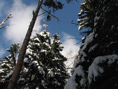 Зиму наконец показали снег лес зима