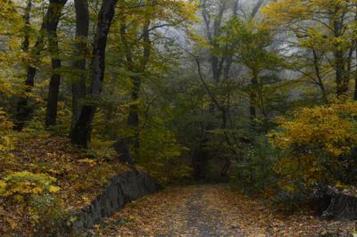 В осеннем лесу......