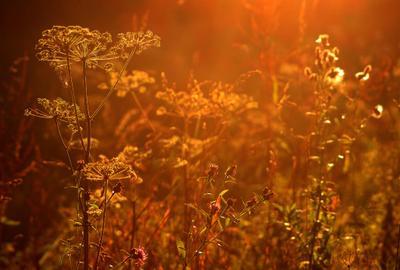 Закатное солнце 11.08.2019 Москва Лосиный остров трава закат
