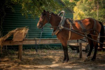 У кормушки кони