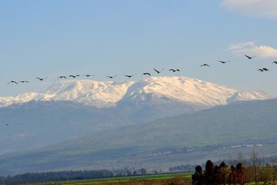 Между Небом и Землей Заповедник Хула. Север Израиля