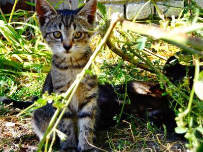 ***Без дома кот котенок бездомный улица