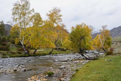 Ильгумень близ Чике-Тамана Горный Алтай пейзаж реки Ильгумень nataly-teplyakov