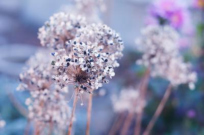 *** цветы природа красота