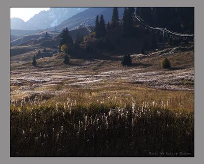 Пойманный свет Горы свет трава линии осень